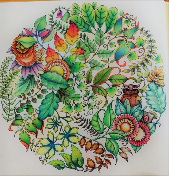 Johanna Basford Enchanted Forrest, third drawing coloured.png