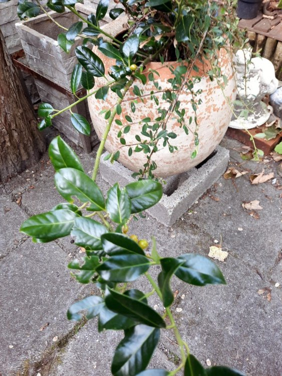 Planten-Lewenborg-gratis.jpg